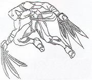 Str2 unused claws