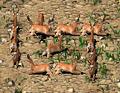 Deer Crusader.png