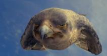 Falcon fight
