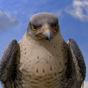 Falcon Stuart Little Wiki Fandom