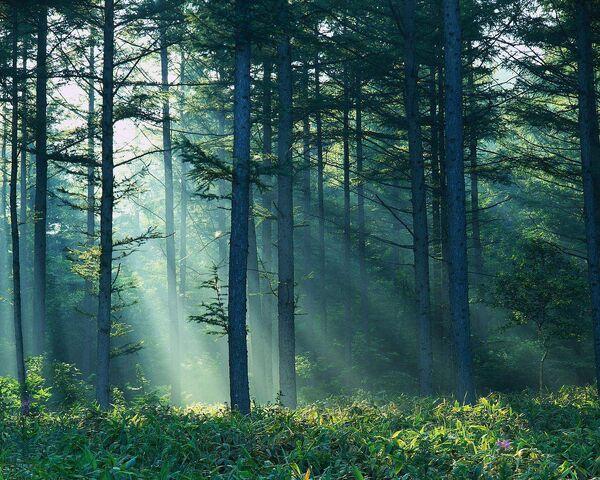 File:Forest-sunlight-grass-76772823551.jpeg