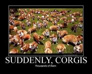 Suddenly-corgis