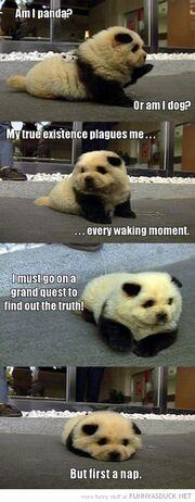 Funny-am-i-panda-or-dog-first-nap-pics