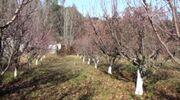 The Orchard (2)