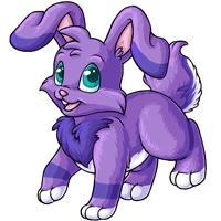 Kanis lilac