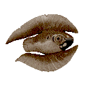 Cooked Feather Fish Icon
