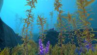 Arctic Kelp Forest thumb