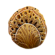 Coral Tube Sample Icon