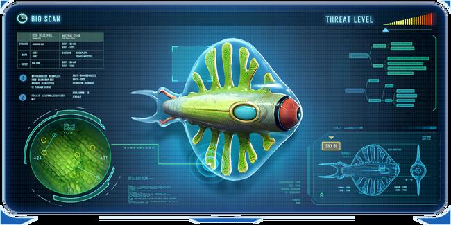 Discus Fish frame