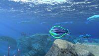 STB Hoopfish