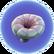 Глубинный гриб