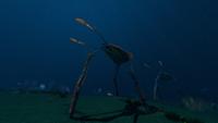 Sea Treader's Path Biome