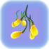 クリープバイン種子クラスター