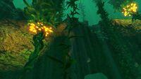 Kelp Forest (40)