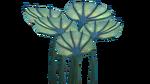 Pygmy Fan Flora