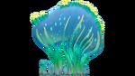 Sea Crown Flora