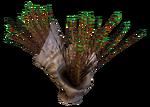 Spiked Horn Grass Flora