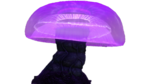 Snake Mushroom Flora