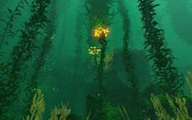 Biome - Kelp Forest