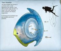 Alex titanholefish