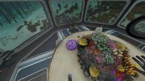 Corail cerveau conf alien