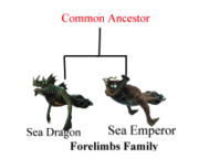 Forelimbs Family