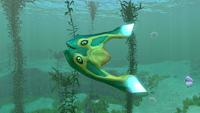 Boomerang Kelp Forest