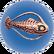 Spinefish asséché