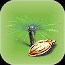 Fern Palm Seed