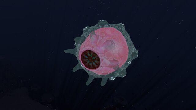 Файл:Floater.jpg
