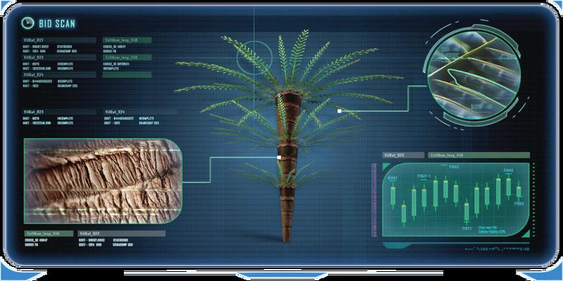 Fern Palm-0