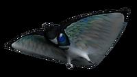 Skyray Fauna