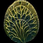Shell Plate Fauna