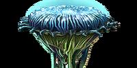 Раповая лилия стд