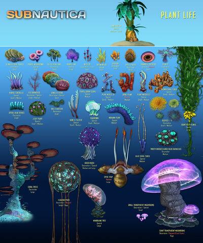 Fichier:Flora List 1.jpg