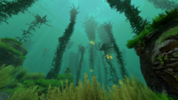 Kelp Forest Biome