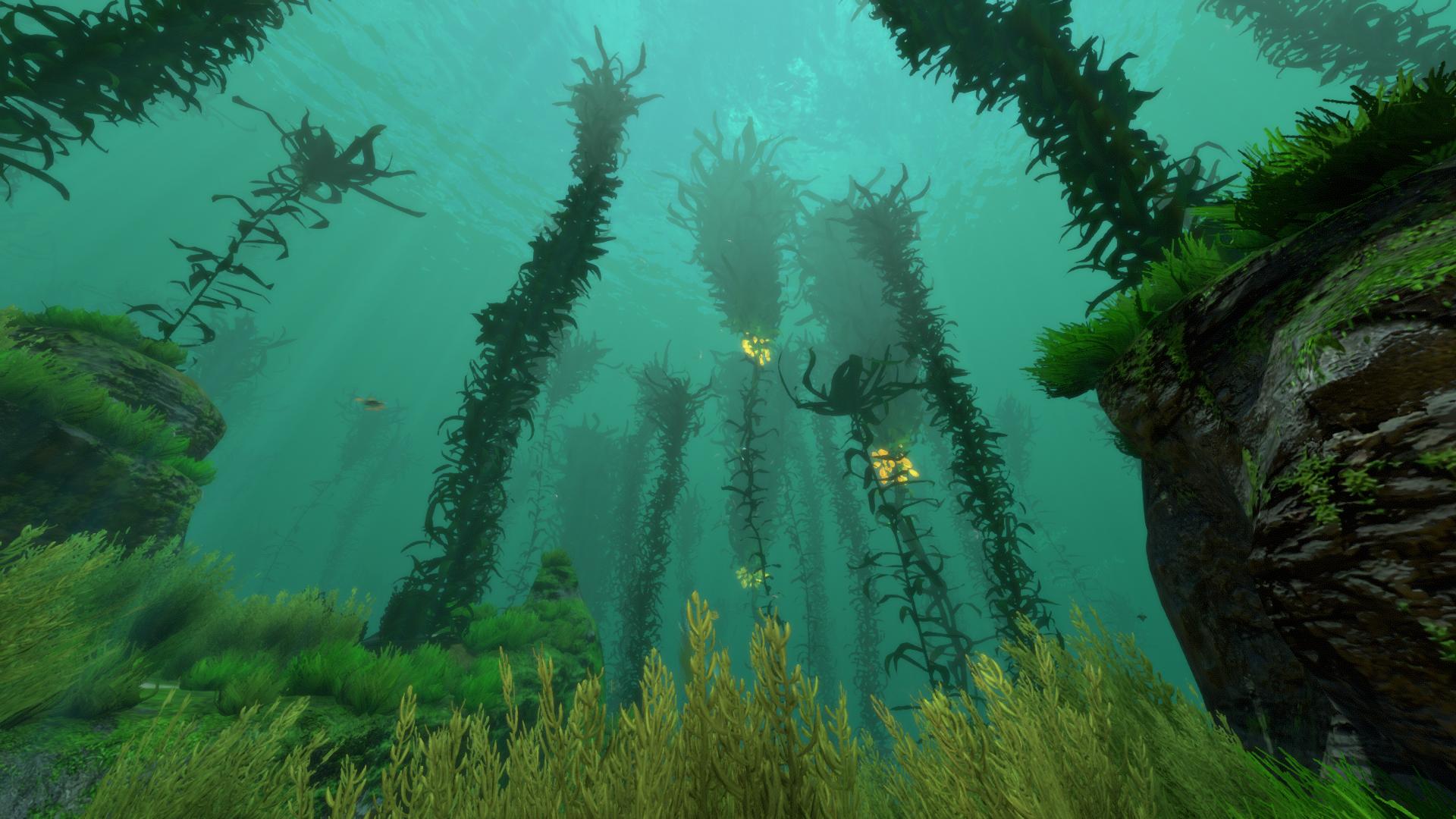 Kelp Forest | Subnautica Wiki | FANDOM powered by Wikia