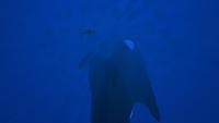 UI Large Island Underside