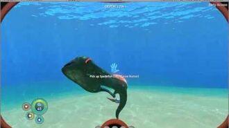 Spadefish turn test