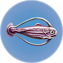 File:Cured Hoopfish.png