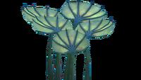 Карликовый веер Флора