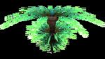 シダのやし植物相