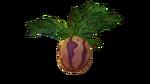 マーブルメロン植物フローラ