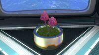 Planter Pot (2)