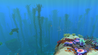 Safe Shallows Kelp Forest Border