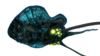 Reefback Fauna