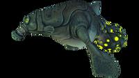Gasopod Fauna