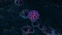 Purple Pinecone (4)