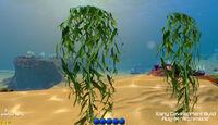 CoralReefHangingSeaweed