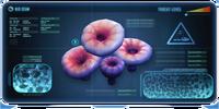 Acid mushroom
